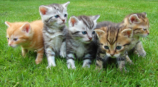 upgrade-found-acl-kittens.jpg
